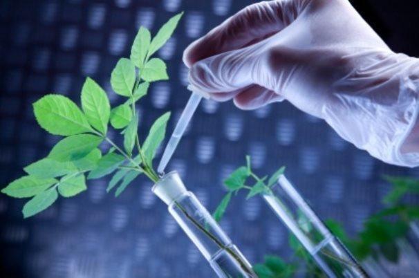 دستاوردهای پژوهشگاه مهندسی ژنتیک و زیست فناوری تشریح شد